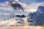 Group of Canadian geese flying in V-formation over sunburst poster