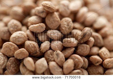 Sarpgandha Seeds (Rauvolfia serpentina)