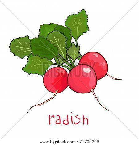 beam radish