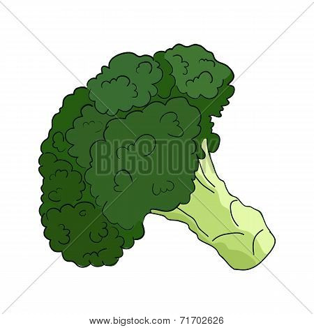 Broccoli in vector on white