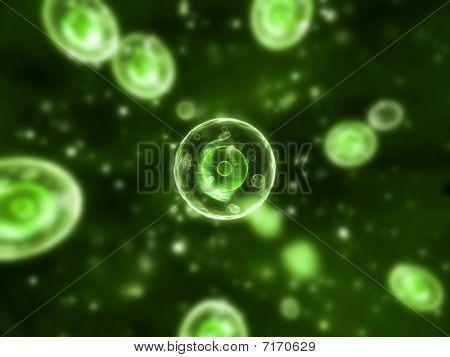 human cells