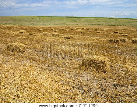 Straw Bales In Agricultural Harvested Wheatfield