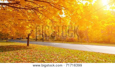 Autumn tree with yellow fall leaves in scenic park