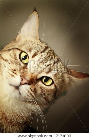 Cute kitty looking