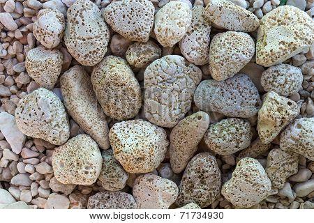 Holey Stones On A Beach