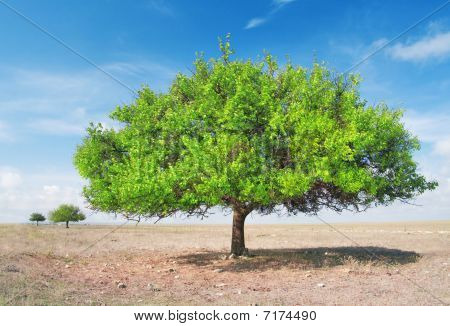 three green tree in torrid steppe
