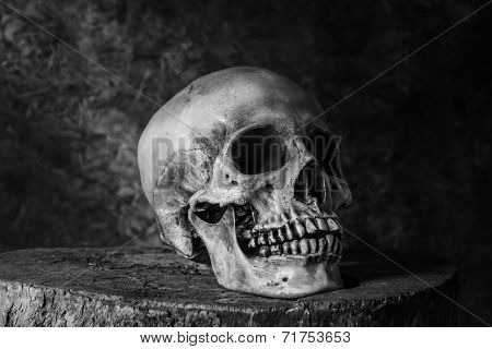 Still life with ideas about art skull
