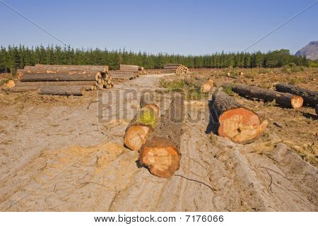 Forest destruction due to the logging industry