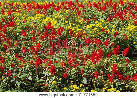 Flowerbed Background