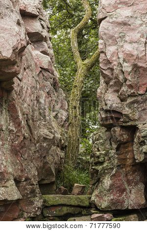 Tree Between Rock