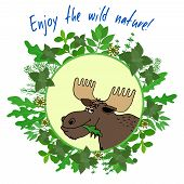 Enjoy The Wild Nature inspirational message above an emblem of a moose chewing happily on a leafy enclosed in a leafy green frame  vector poster poster