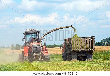 Forage Plants Harvesting