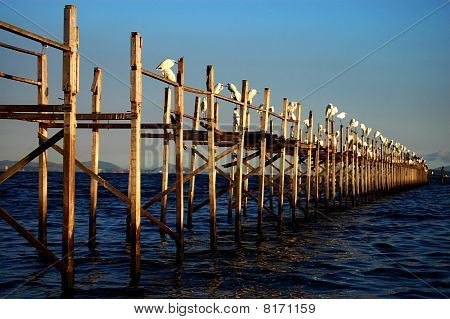 Worn Pier and Egrets II