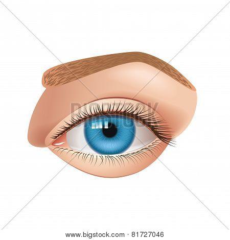 Human Eye Isolated On White Vector