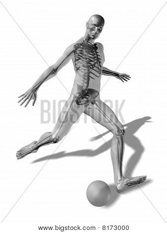 3D Rendering Of A Man About To Kick A Ball With The Skeleton Visible Through A Transparent Body