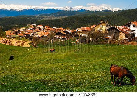 Mountain Village.