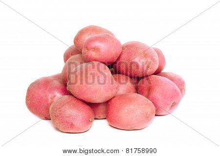 Young Pink Potato. Isolated