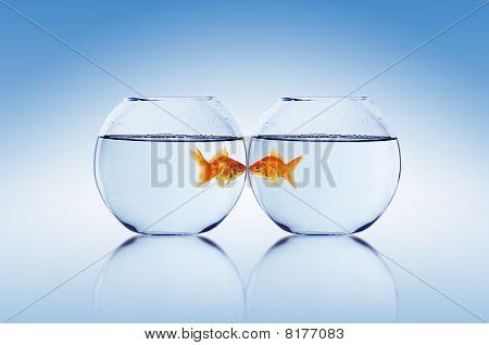 Goldfish and Aquarium