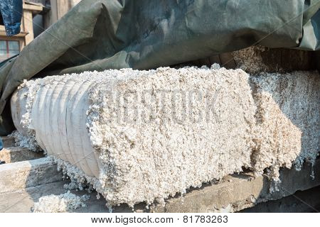 Infertile Cotton Seeds