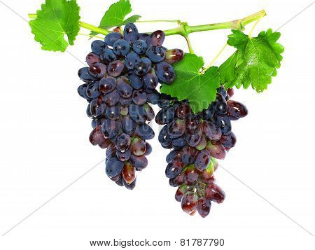 Black Grape On Cane Vine With Leafe. Isolated