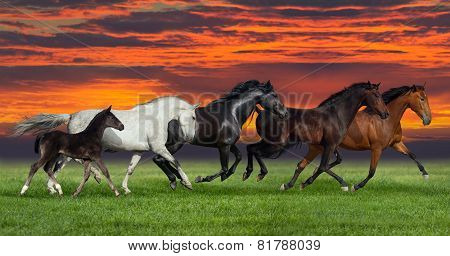 Five horse running outdoor