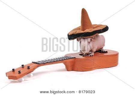 Guinea Pig In Hat On Guitar