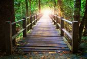 perspective of wood bridge in deep forest crossing water stream and glowing light at the end of wooden ways poster