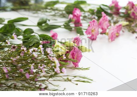 Beautiful Flowers Waiting For Their Perfect Match