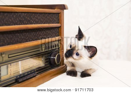 Kitten Looks After The Radio With A Curiosity And Interest
