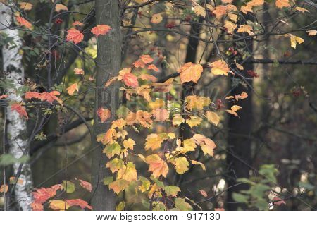 fall forest scenery with dry colorful leafs poster