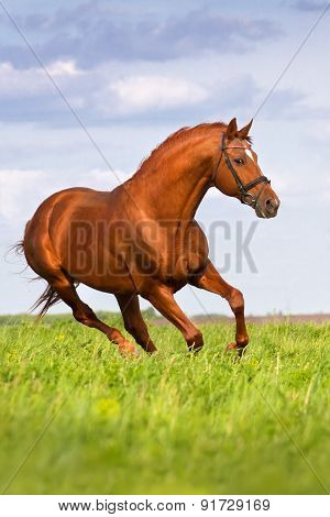 Red horse gallop