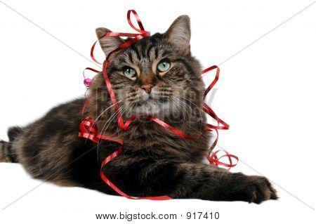 Cute Cat Gift 3