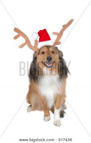Christmas Dog Deer