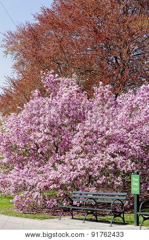 Tram Stop Under A Magnolia Tree