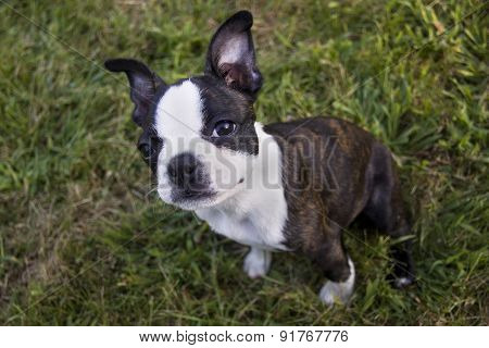 Poopsie Sitting In Grass Looking At Viewer