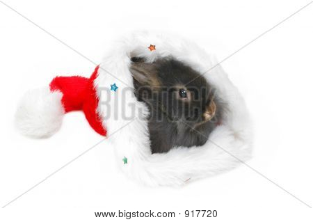 lion rabbit in christmas bonnet on white background poster