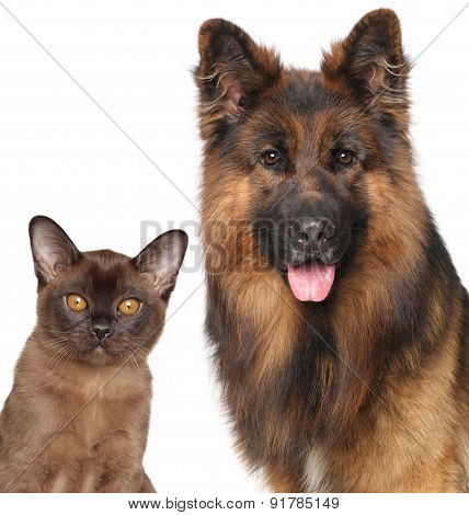 Cat And Dog Close-up Isolated