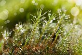Macro of green moss after rain at sunny day poster