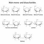 Structural formulas of main cyclic monosaccharides and disaccharides 2d illustration vector eps 8 poster