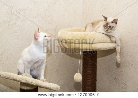 Mother cat relaxing while son is waiting