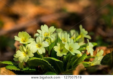 Beautiful wild flowers, in the forest, on a sunny spring day