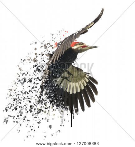 Digital Painting of  Pileated Woodpecker