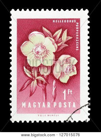 HUNGARY - CIRCA 1958 : Cancelled postage stamp printed by Hungary, that shows Hellebore.