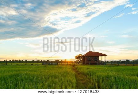 House in rice paddy fields at sunrise.