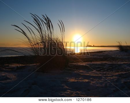 Winter Beach Weeds
