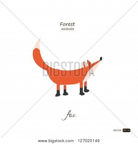 Fox in cartoon style on white background. Forest animals. Vector illustration