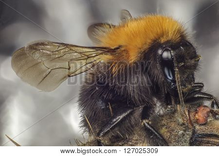 spring, the bumblebee has flied and has sat down on a branch