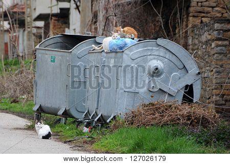 VETRINTSI VILLAGE, VELIKO TARNOVO PROVINCE, BULGARIA - MARCH 15, 2016: Three stray cats sit on the garbage container