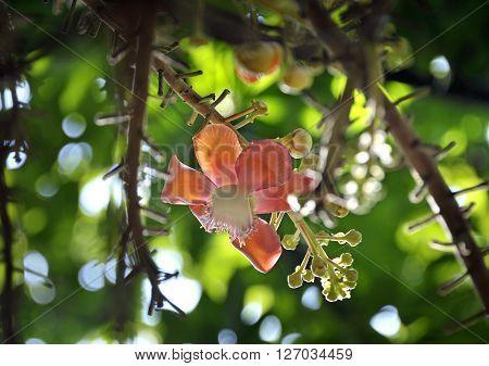 Sal Flower