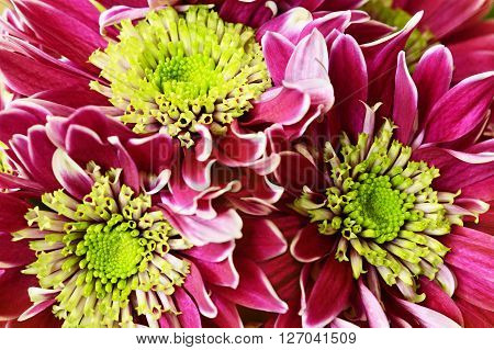 Closup of aster flowers bouquet for background